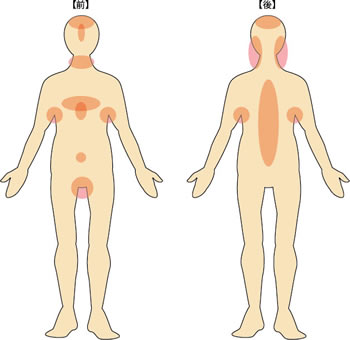 皮脂腺の多い場所